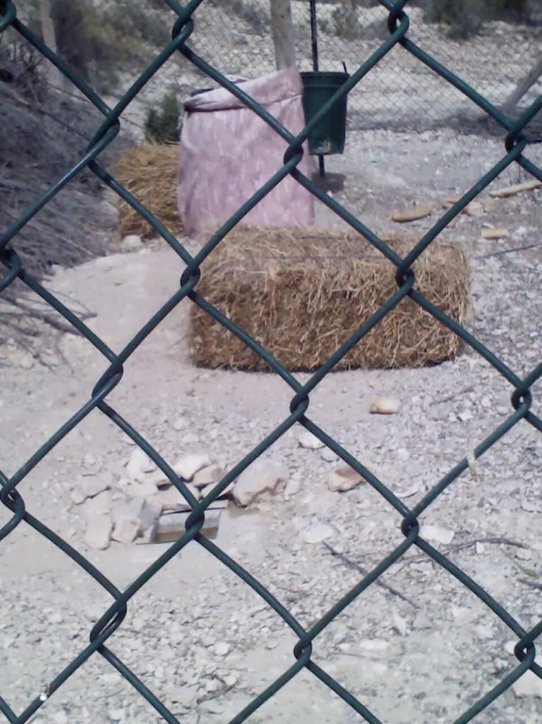 Bala de forraje club de caza la Totovia de Crevillente