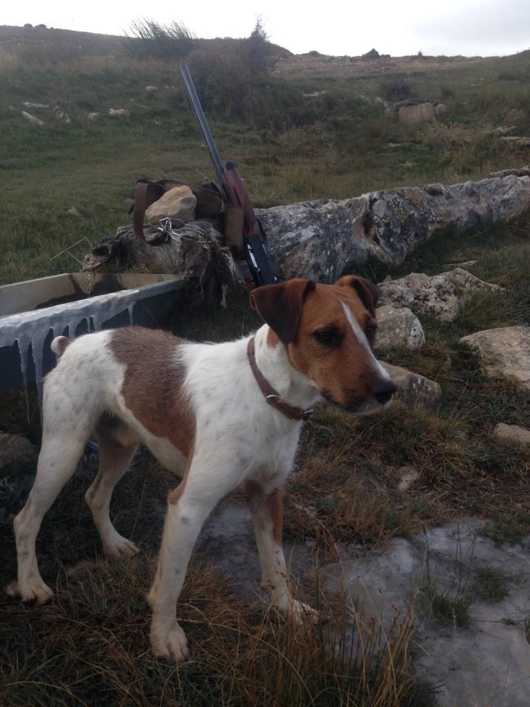 perro-de-caza-Roman-Samper-768x1024